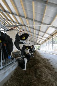 Melkveehouderij Fleerakkers stal